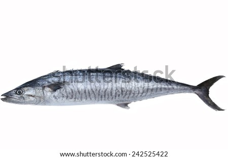 Fresh king mackerel fish isolated on the white background - stock photo