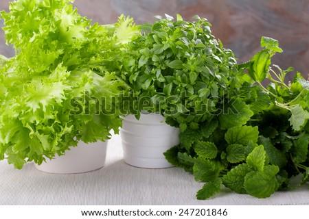 Fresh kitchen herbs. Basil, salad and lemon balm (Melissa). - stock photo