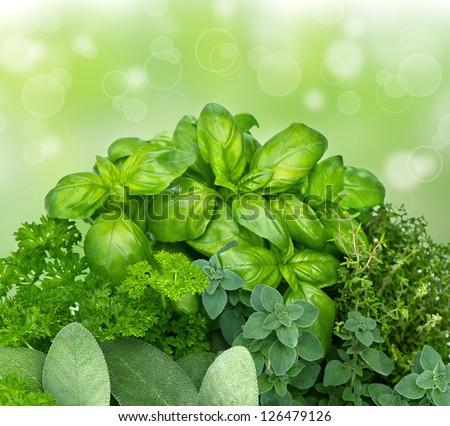 fresh kitchen herbs parsley, basil, rosemary, thyme, sage, marjoram on blurred green background. mediterranean cuisine - stock photo