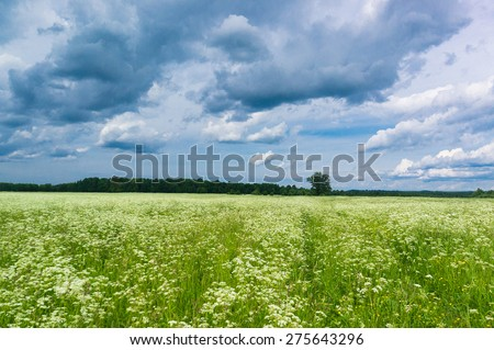 Fresh Landscape Grass Lawn  - stock photo