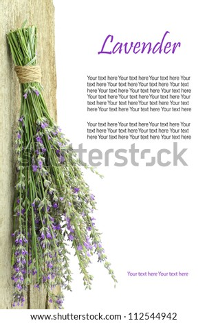 Fresh lavender hanging from a rope with copy space - stock photo