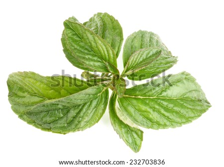 Fresh Leafs of Peppermint isolated on white background