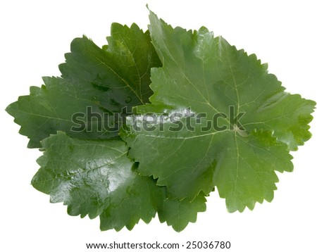 Fresh leaves of a grapes with drops of water isolated on white - stock photo