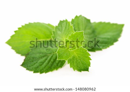 Fresh leaves of mint isolated on the white - stock photo