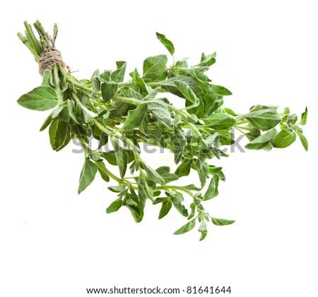 fresh leaves oregano  marjoram (Origanum Vulgare L.) isolated - stock photo