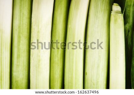 Fresh leek as abstract natural green background