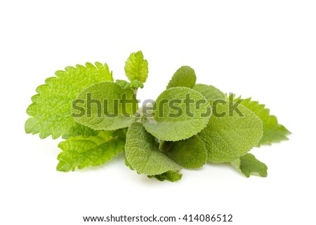 Fresh lemon balm and sage on a white background - stock photo