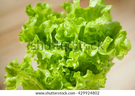 Fresh lettuce. Closeup picture. Focus on a leaf - stock photo