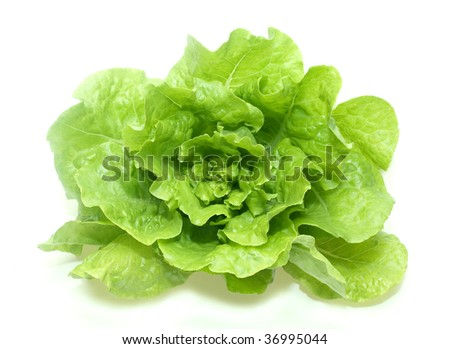fresh lettuce in a white background