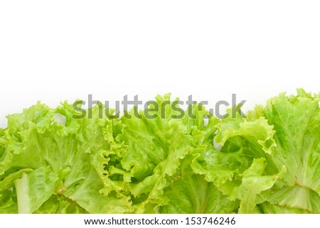 Fresh lettuce on white background.