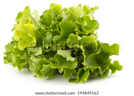 Fresh lettuce salad leaves bunch isolated on white background