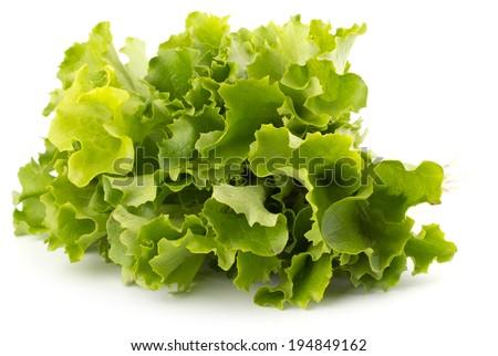 Fresh lettuce salad leaves bunch isolated on white background - stock photo