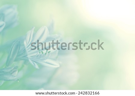 fresh lily of nile on soft color for background - stock photo