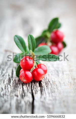 Fresh lingonberries with some leaves, selective focus - stock photo