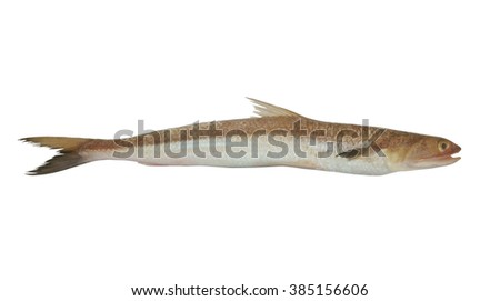 Fresh lizardfish or wanieso saurida isolated on white background