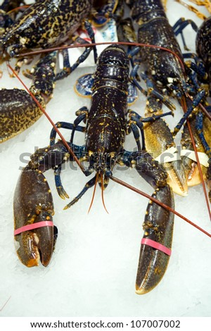 fresh lobster on a fishmonger stall