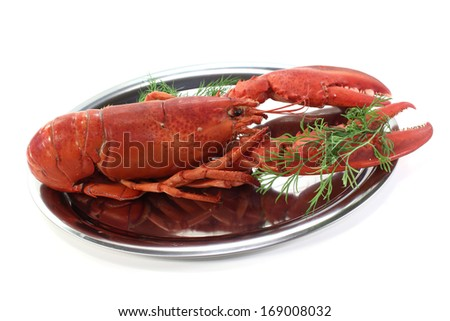 fresh lobster with dill - stock photo