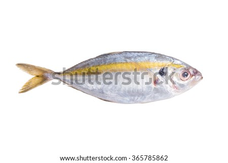 Fresh mackerel fish isolated on white background. This has clipping path. - stock photo
