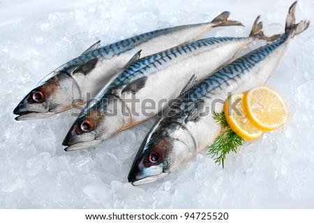 Fresh mackerel fish (Scomber scrombrus) on ice - stock photo