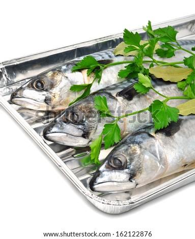 Fresh mackerel fishes with parsley on aluminium foil tray isolated on white - stock photo