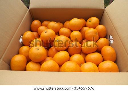 fresh mandarin oranges from farm in box - stock photo