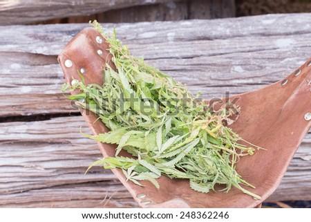 fresh marijuana plant bud with crystals on grunge wooden desk - stock photo