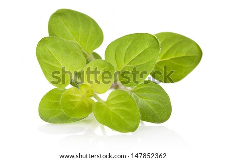 Fresh marjoram leaves isolated on white background. Culinary aromatic herbs. - stock photo