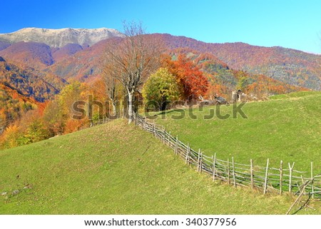 Fresh meadow divided by wooden fence in autumn