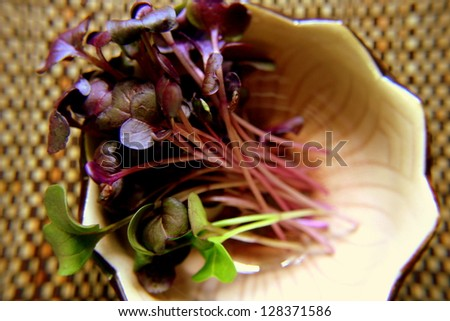 Fresh micro greens in ceramic bowl