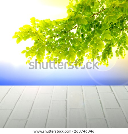 fresh mild early growth green leaves and branches on morning sunrise over brick pave way - stock photo