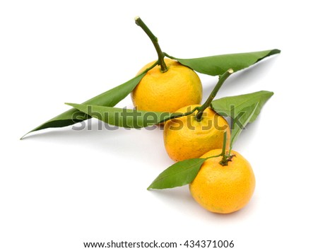 fresh mini tangerines isolated on white