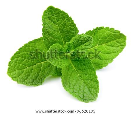 Fresh mint close up on white - stock photo