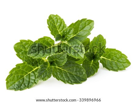 Fresh mint herb leaves isolated on white background cutout - stock photo