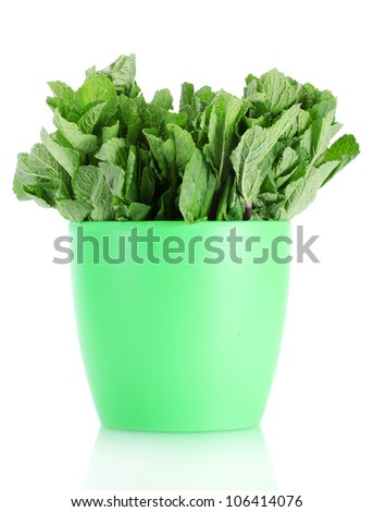 Fresh mint in flowerpot isolated on white