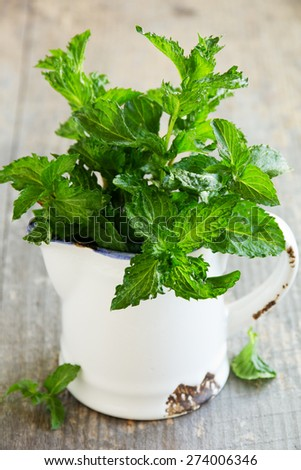 Fresh mint in the pitcher on the old Board. - stock photo