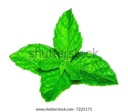 Fresh Mint ISOLATED - stock photo