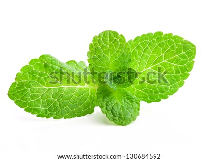 Fresh mint isolated on a white background - stock photo