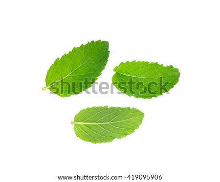 Fresh mint isolated on the white background. - stock photo