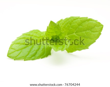 Fresh mint leaves - stock photo