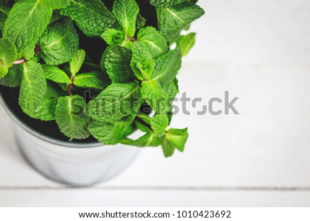 Fresh mint leaves close up portrait on white background.