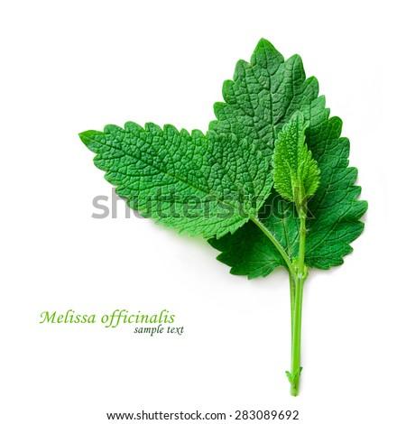 Fresh mint leaves isolated on the white background. Studio macro - stock photo