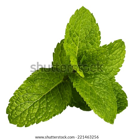 Fresh mint leaves isolated on white  - stock photo
