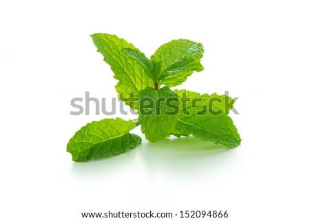 Fresh mint leaves isolated on white background - stock photo