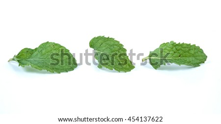 fresh mint Leaves isolated on white background