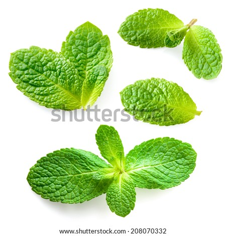 Fresh mint leaves isolated on white background. Collection - stock photo