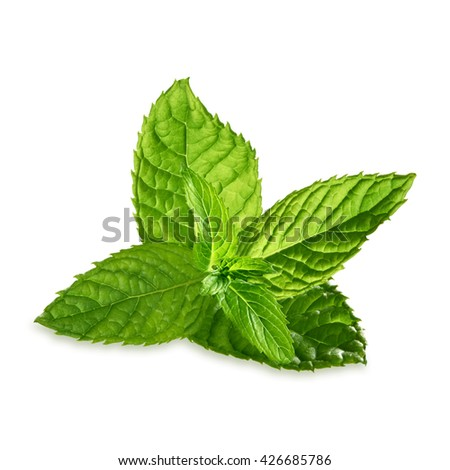 Fresh mint leaves isolated on white background including clipping path - stock photo