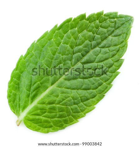 fresh mint leaves isolated on white background. Studio macro