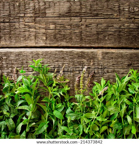 Fresh  mint leaves on old wood background  - stock photo