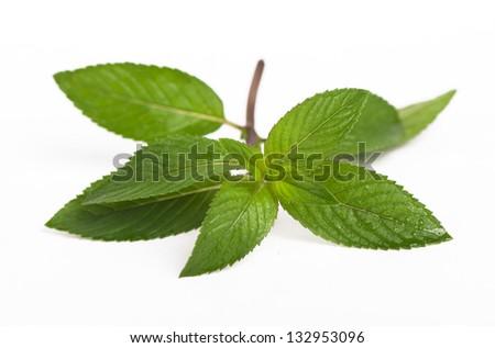 Fresh mint leaves on white background - stock photo