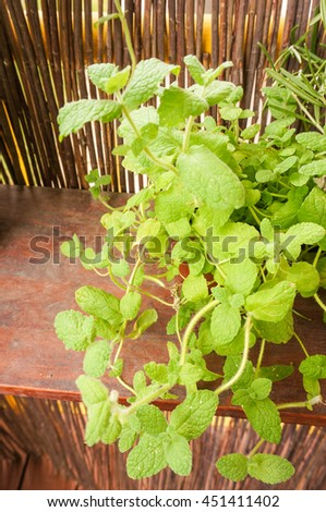 Fresh mint plant on a wooden shelf